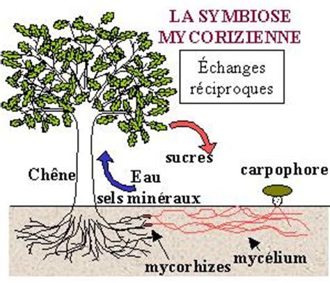 133247599x le parasitisme et la symbiose symbiose avec les arbres