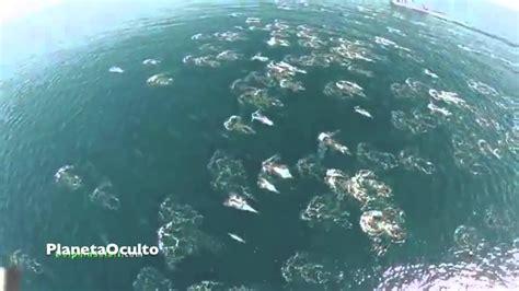 imagenes y videos reales de sirenas dron capta delfines nadando con sirenas youtube