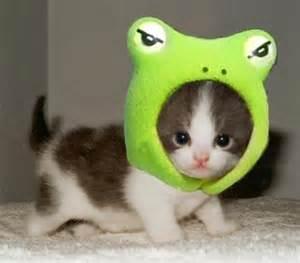 cute kitten photo by sweet black candy | photobucket