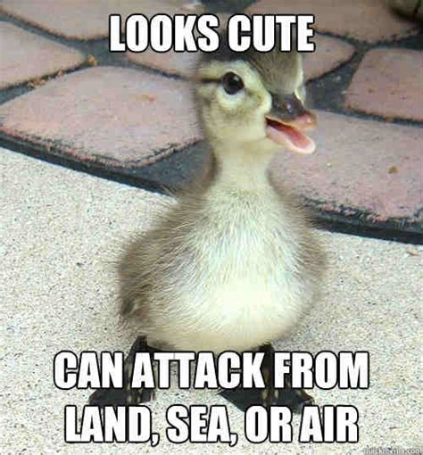 20 totally adorable duck memes you won t be able to resist