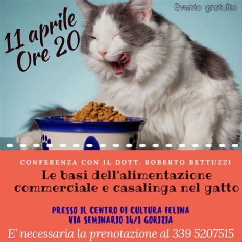 dieta casalinga per il gatto dieta casalinga gatto rifugio amicioso
