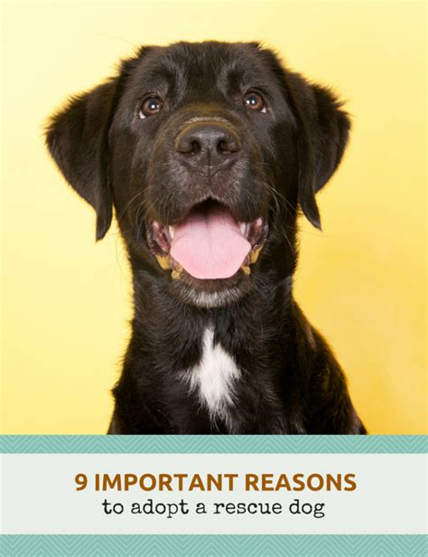 8 Reasons To Adopt A Pet From A Shelter by 9 Awesome Reasons To Adopt A Rescue Puppy Leaks