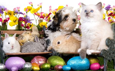 easter puppy kitten puppy rabbits chickens eggs flowers easter wallpaper 1920x1200 46219