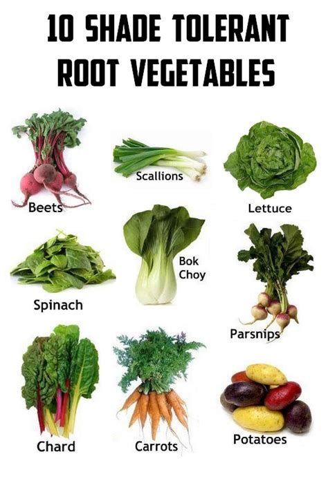 s w vegetables 10 shade tolerant root vegetables vegetable gardening
