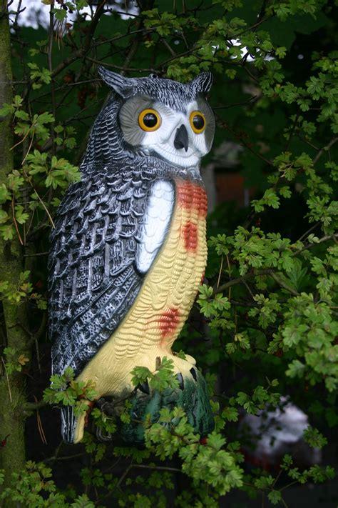 decorative owls decorative owl