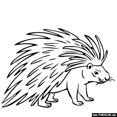 Porcupine Coloring Page Porcupine Coloring Page