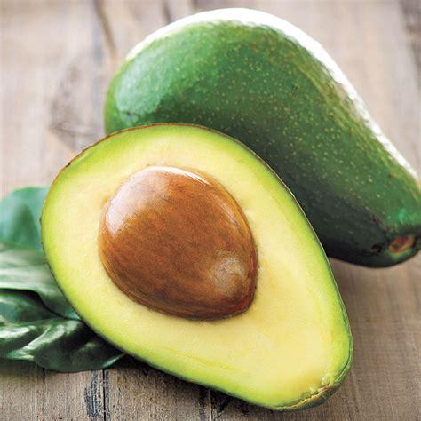 persea avocado wurtz  jackson perkins