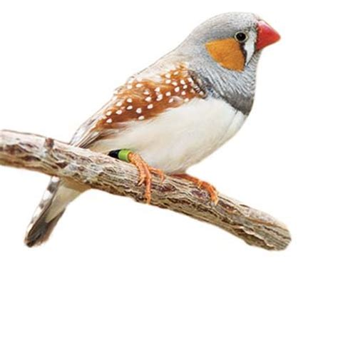 what do house finches eat finches what birds eat this old house