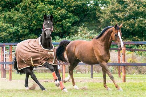 pferd eindecken ab wann thermoregulation beim pferd decke rauf ja oder nein