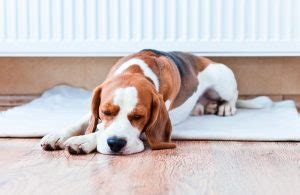 weight management for pets tips about weight management for pets ambassador