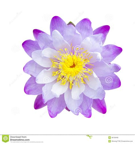 Emberly Top Z By Lotuz purple lotus flower stock image image of nature pond