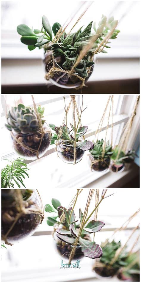 diy succulent window succulent planter diy succulents