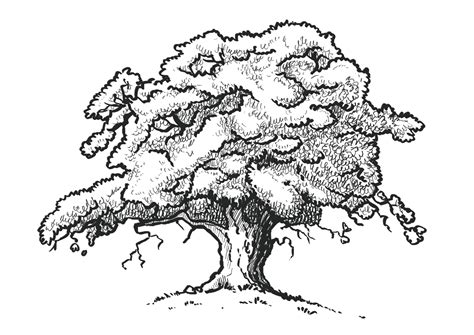 oak tree drawing michael s animation blog digbeth project observational