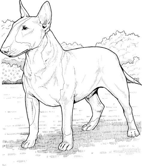 Dog Breed Coloring Pages Breed Coloring Pages