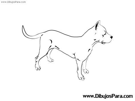 imagenes para dibujar de perros pitbull dibujo de perro raza pitbull para pintar dibujos para