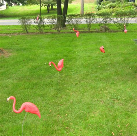 pink flamingo lawn ornaments interesting facts about lawn care