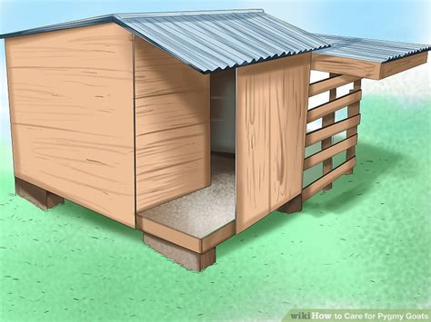 how to care for pygmy goats with pictures wikihow