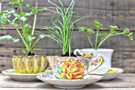 herbs planter tea cup planters for herbs