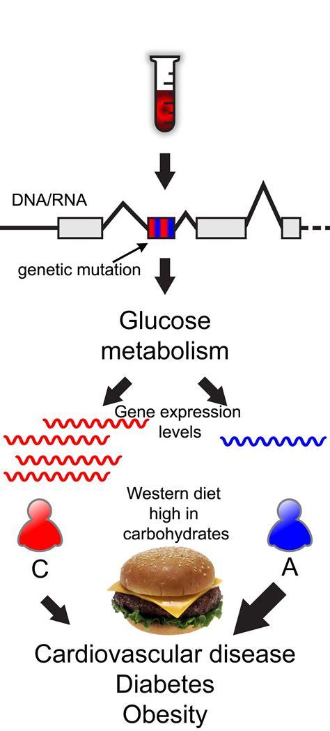 Unc Pre Mba by Study Identifies Genetic Predeterminants For Diabetes In
