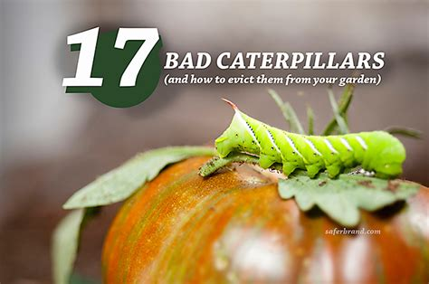 How to Tell Good Caterpillars from Bad Caterpillars