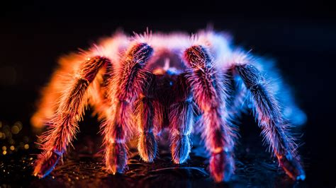 wallpaper beautiful spider light fluff  uhd  picture image