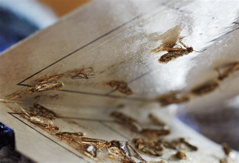 Wie Wird Silberfische Los by Umweltbundesamt F 252 R Mensch Und Umwelt