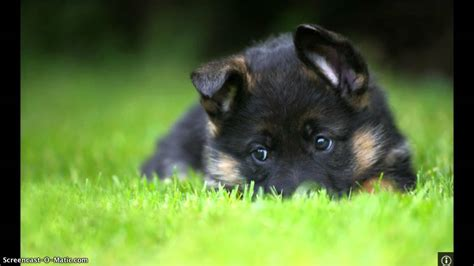 lonely puppy image gallery lonely puppy