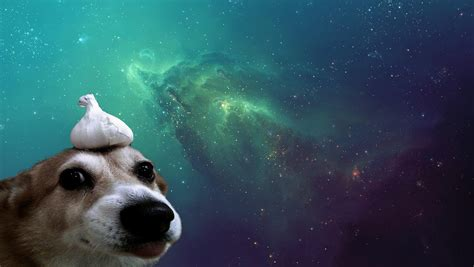 Dogs In Space space wallpapers hd desktop and mobile backgrounds
