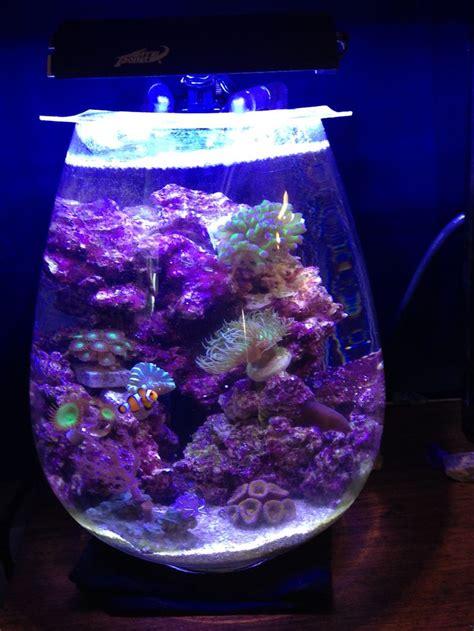 113 best reef images on aquariums fish aquariums and fish tanks