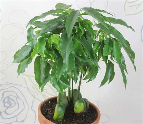 indoor plant seeds top ten native plants to purify the air 1 million women