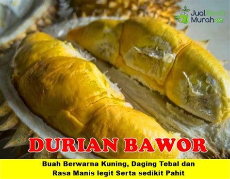 Bibit Buah Durian Bawor Unggul durian bawor unggul jualbenihmurah