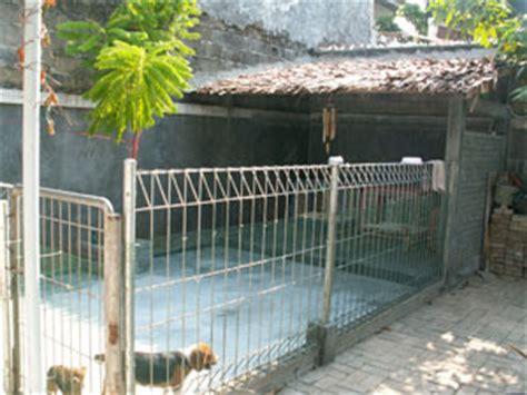 artikel membuat kandang entok kandang perawatan pemeliharaan anjing anjingkita com