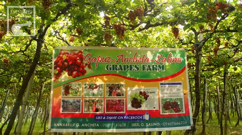 my ate a grape my ate 3 grapes 28 images blue poodle the deer ate my grapes 365 days of learning