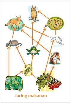 cadenas synonyme pengertian jaring jaring makanan pengertian ilmu