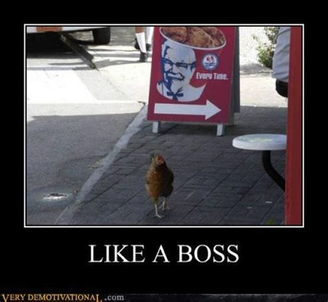 Like A Boss Meme - 100 most funniest chicken memes collection golfian com