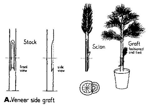 grafting diagram the world s catalog of ideas