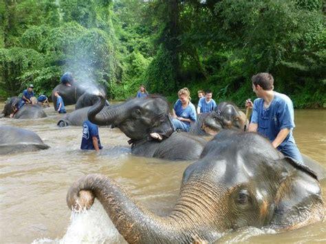 reserva elefantes fotograf 237 a de thai elephant home mae