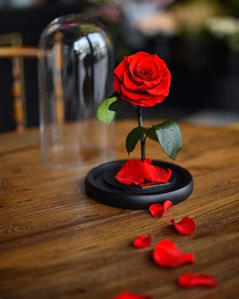 beauty and the beast forever rose real enchanted rose lasts 3 years without water or sunlight