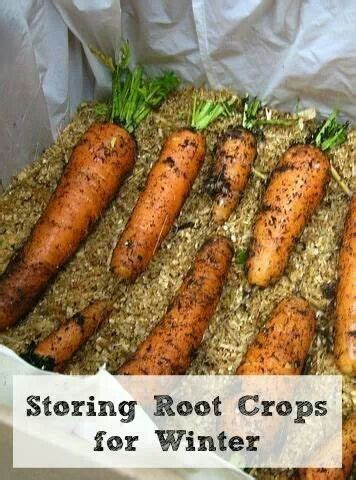 storing root vegetables 31 best images about udderly smooth ways to savor summer