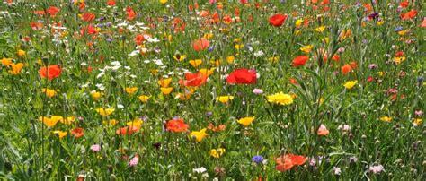 foto di prati fioriti image gallery prato fiorito