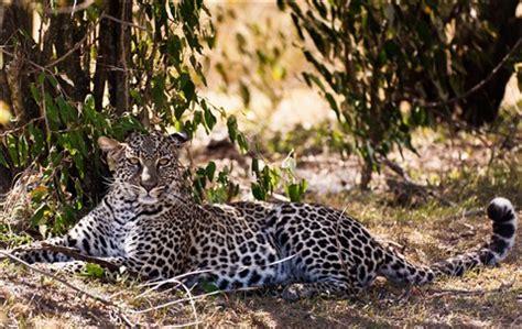 leopard 4: millsjc: galleries: digital photography review