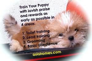 how many times should a shih tzu eat 031208asingapore toa payoh veterinary vets cat rabbits hamster veterinarian