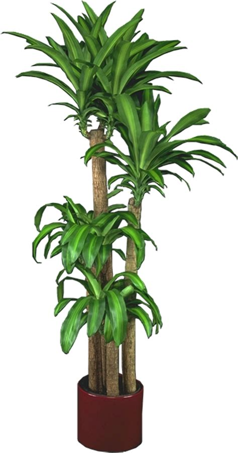 low light plants indoor plants house plants in boston ma evergreen tropical interiors inc