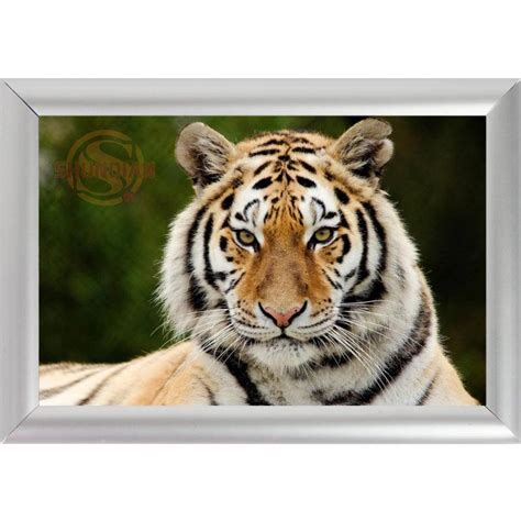 home interior tiger picture popular tiger picture frames buy cheap tiger picture frames lots from china tiger picture frames