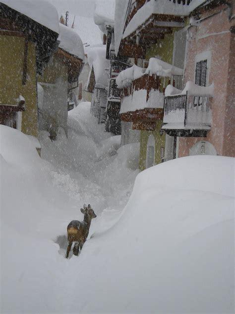 pragelato web tempo reale maltempo forestali salvano cervo affamato per neve e gelo
