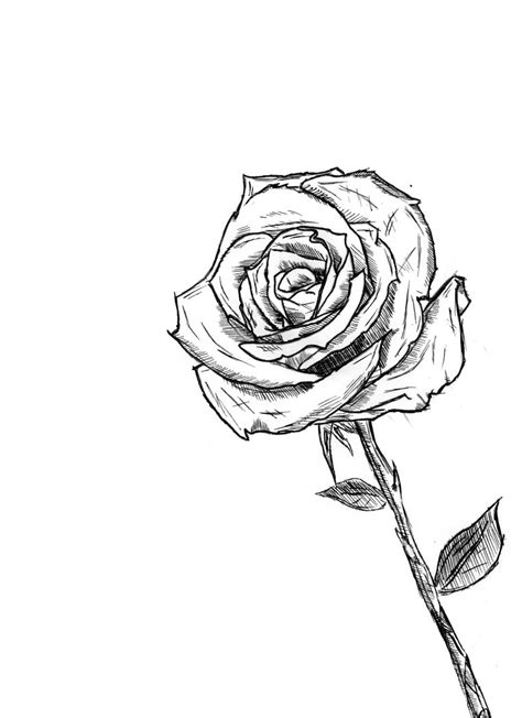 quick sketches jason rose quick drawing rose by alieninsanity on
