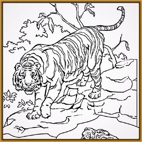 imagenes para pintar tigre tigres para pintar y colorear para ni 241 os fotos de tigres