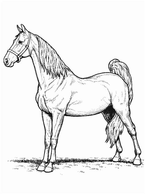coloring pictures of horses coloring page new calendar template site