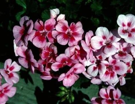 flowering shrubs for afternoon sun discover and save creative ideas