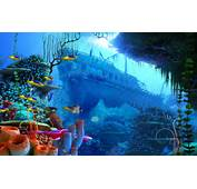 Beautiful Coral Reef Wallpaper  1920x1200 35095